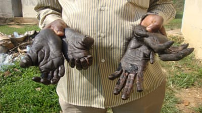 Trafficking great ape body parts in Cameroon