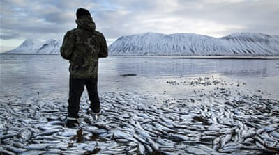 A scene from the shore of Kolgrafafjordur, a small fjord on the Snaefellsnes peninsula in western Iceland [Brynjar Gauti/AP]