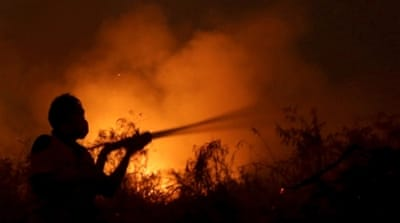 Counting the cost of Indonesia's forest fires