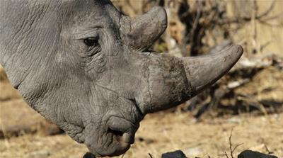 The fight against wildlife poaching
