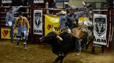 Bucking the trend: American rodeo under scrutiny