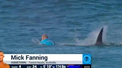 The World Surf League said on Facebook that Fanning was not injured in the encounter [Twitter: @wsl]