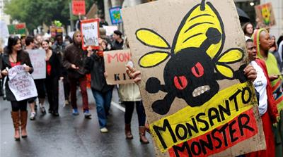 Monsanto: Seeds, bees and big business