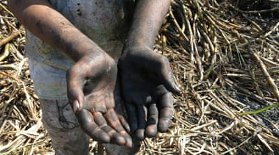 At 14 years old, sugar cane labourer Fernando already has the hands of a working man [Natasha Pizzey/Al Jazeera]
