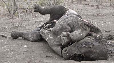 The abusive and bloody business of rhino horn