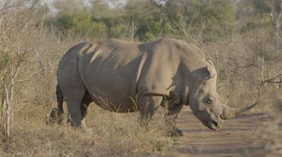 How conservationists saved one young rhino's life
