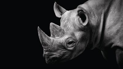 Journey of a rhino horn