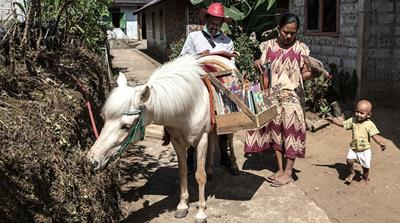 Luna, the horse, delivers books in Indonesian village