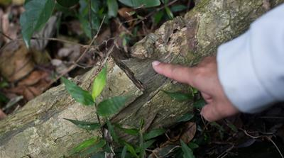 Hong Kong conservationists push to save agarwood