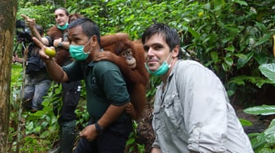 On the trail of the orangutan whisperer