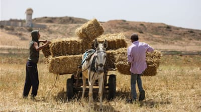 A fresh harvest for farmers in Gaza
