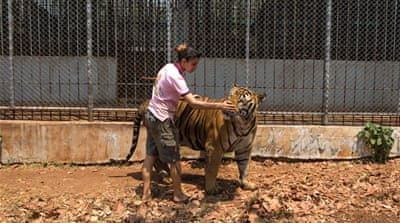 The end for Thailand's infamous Tiger Temple