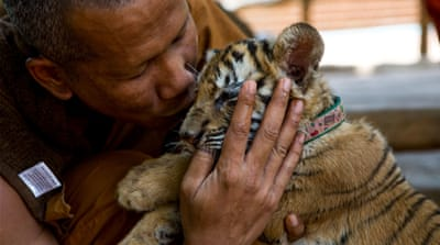 What really happened at Thailand's Tiger Temple?