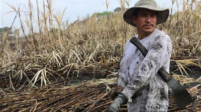 Ermando Hernandez, 39, has spent a total of 12 years cutting sugarcane and suffers from CKDu, which also killed his father and brother [Arwa Aburawa/Al Jazeera]