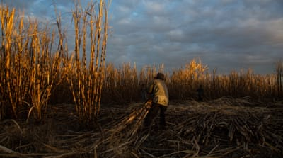 Help comes to El Salvador's sick sugarcane workers