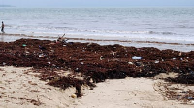 Seaweed smothers beaches in Sierra Leone