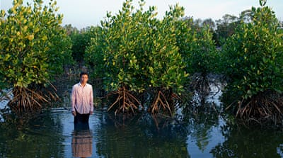 Thailand: Reclaiming mangroves for shrimp production
