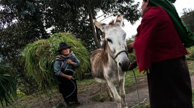 Maintaining traditions in Salasaca of Ecuador's Andes