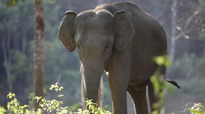 Bangladesh: Wild elephants attack Rohingya camp, kill 4