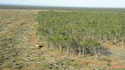 Soaring deforestation new threat to Great Barrier Reef