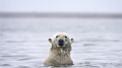 Fragile Arctic is here to stay: Report