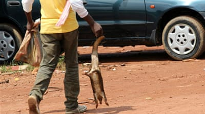 Bushmeat trade tests Cameroon's Ebola prevention