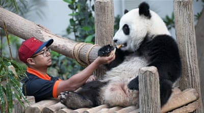 Saving China's pandas