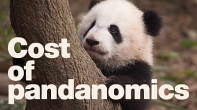 What is the true cost of a panda?