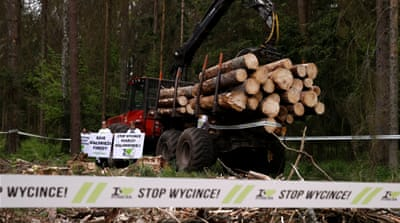 Poland's Bialowieza: Losing the forest and the trees