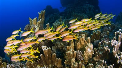 The quest to save the world's coral reefs