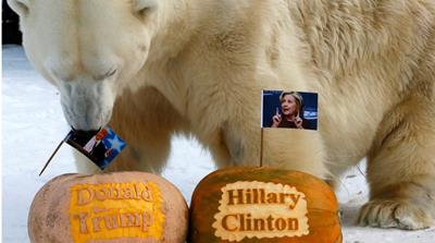 Polar bear Felix predicts the result of the US presidential election at the Royev Ruchey zoo in the Siberian city of Krasnoyarsk, Russia, on November 7, 2016 [Reuters/Ilya Naymushin]