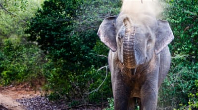 Elephants on 'hostile territory' in Sri Lanka