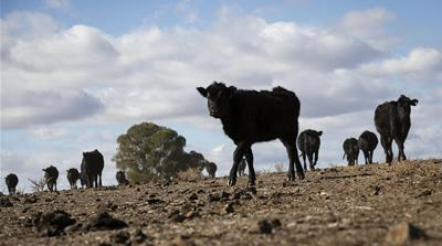 In the grip of drought: Should Australia's farmers be subsidised?
