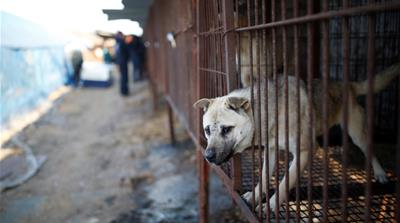 Olympics brings focus on South Korea's dog-meat culture