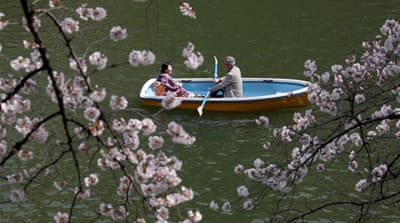 Visitors flock to see the cherry blossoms in Japan