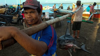 Tanjung Luar: A village renowned for shark trading