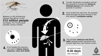 Life cycle: Malaria