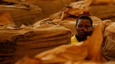 Zimbabwe tobacco farms: Child labour, abuse rife, HRW says