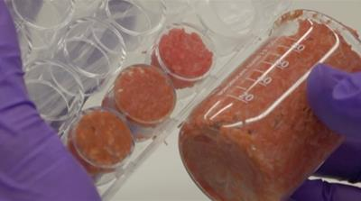 Test-tube burgers and the future of meat