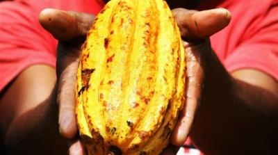 Ghana and Ivory Coast cocoa strategy  [Getty Images]