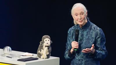 Jane Goodall: Chimpanzees, humanity and all that binds them