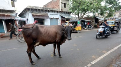India: Mob lynches Muslim man transporting cows in Rajasthan