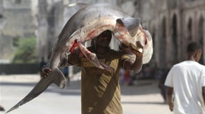 Why are humans killing 100 million sharks every year?