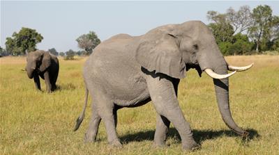 wild and endangered animals al jazeera