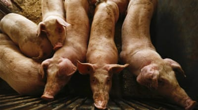 African swine fever keeps spreading across Asia