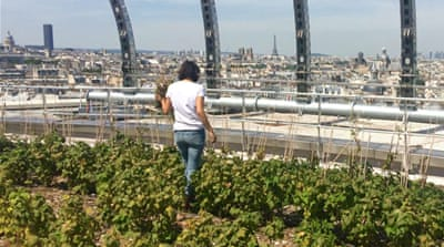 Let them eat the city, say the urban farmers of Paris