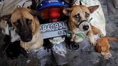 A taste for dog: Indonesia trade persists despite crackdown