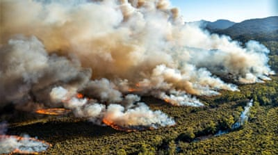 Tasmania fires risk 'wiping out' ancient species