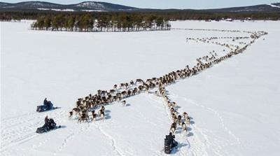 'The Klondike of ore mining': Fighting for the Sami way of life