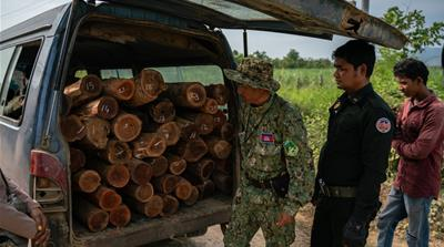 Plundering Cambodia's Forests